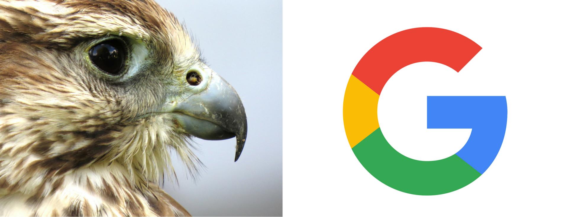 Google Hawk Update